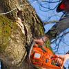 Курянам рассказали, кому подать заявку на спил аварийных деревьев