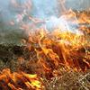 Курян оштрафуют за сжигание сухой травы и мусора