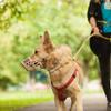 Курянам предлагают выгуливать собак в лесах и на пустырях